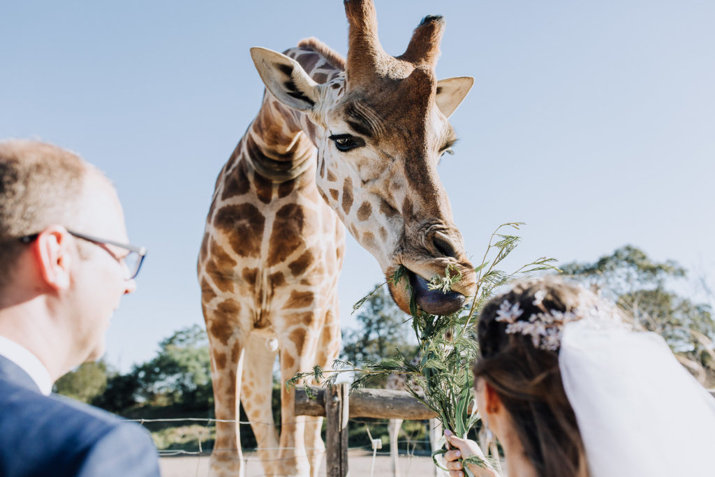 """Where three isn't a crowd. Nadine and Andrew spend their special day with the wildlife at Werribee Zoo.""""We spent the day feeding the giraffes, watching the meerkats, walking past the emus and observing the hippos,"""" Nadine says. """"it was both hilarious and memorable."""""""
